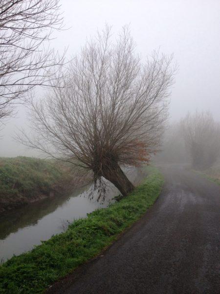 Willow-Pollard-Somerset-levels-3