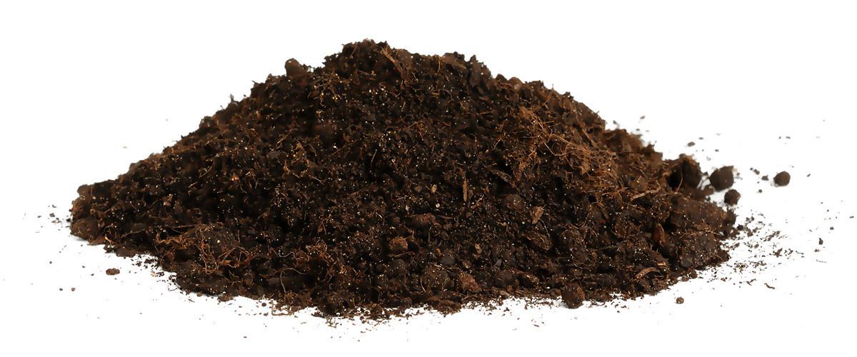 Dirt-prasie